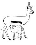 Malebøger Antiloper