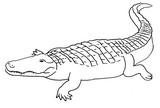Malebøger Krokodille