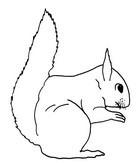 Malebøger Egern