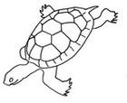 Malebøger Havskildpadde