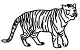 Malebøger Tiger