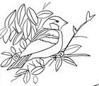 Malebøger Fugl