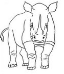 Malebøger Næsehorn