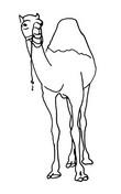 Malebøger Kamel