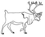Malebøger Rensdyr