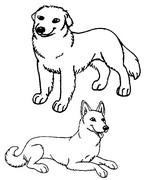 Tulostakaa värityskuvia Koirat