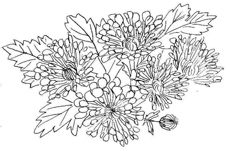 Disegni fiori da colorare e stampare for Disegni da stampare e colorare fiori
