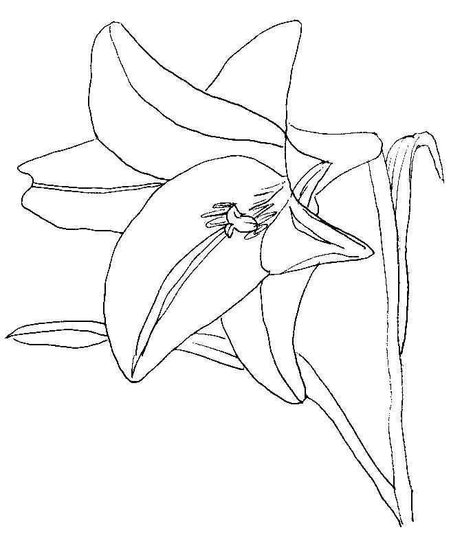 Disegno da colorare fiori 8 for Fiori da disegnare facili