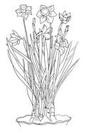 Tulostakaa värityskuvia Narsissi