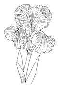 Desenho para colorir Flores