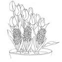 Tulostakaa värityskuvia Hyasintit ja tulppaanit