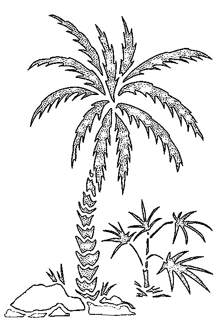coloring pages beach palm trees