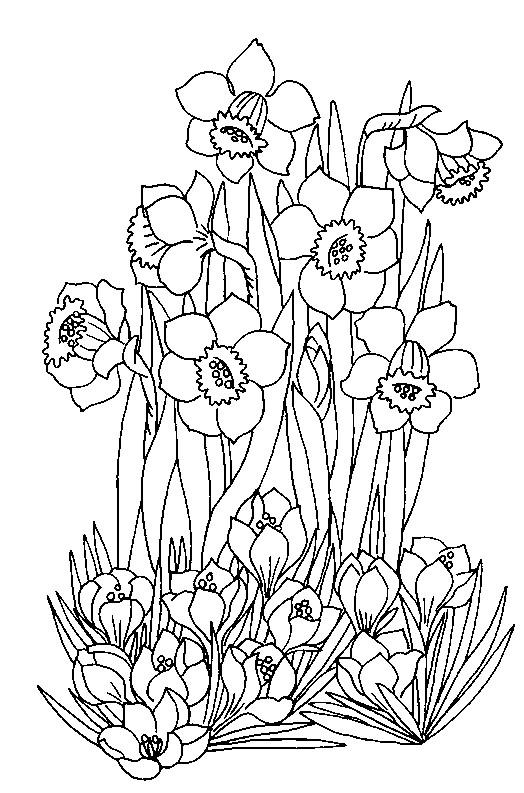 Disegno da colorare primavera