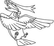 pidgeot pokemon coloring pages - photo#21