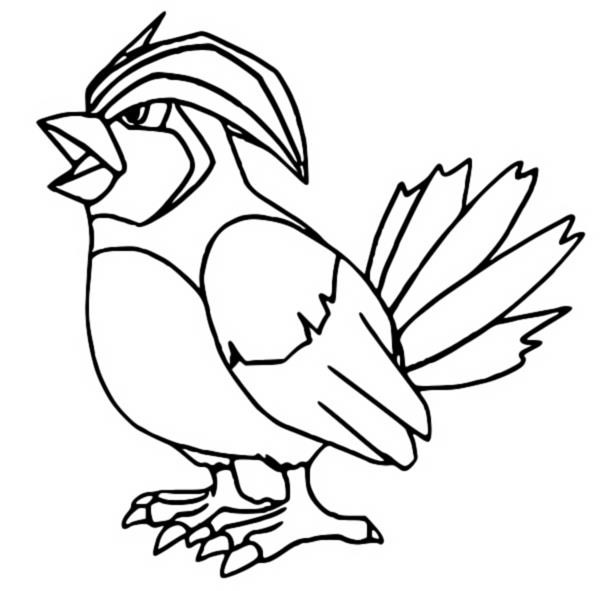 pidgeot pokemon coloring pages - photo#16